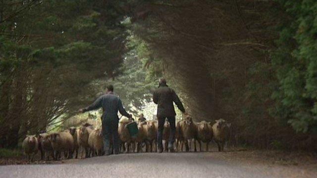 éco pastoralisme/ mouton/ entretien des espaces verts La Bêle Solution
